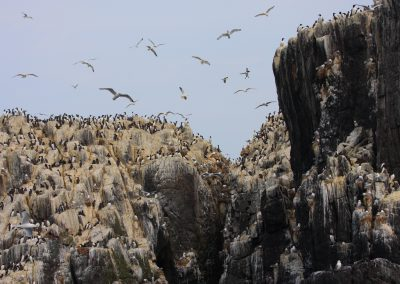 MV_Farne Islands_001