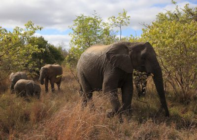 MV_SA_Elefant_005