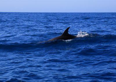 Delfin_001