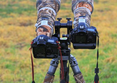 MV_Doppelneiger_Canon_500_300