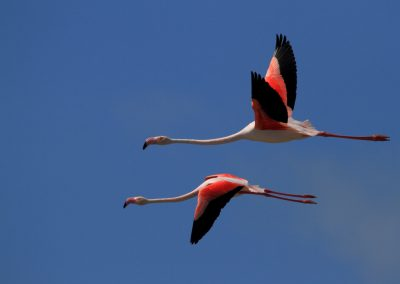 MV_Flamingo_Flug_2012_0007